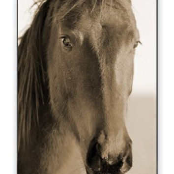 Striking Arabian Horse Image iPhone 4 Quality Hard Snap On Case for iPhone 4 4S 4G - AT&T Sprint Verizon - White Case Cover