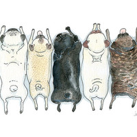 Pug Art Print - Roll Call! - Fawn, Brindle and Black Pugs in a Row - Pug Grumble Ink and Watercolor Illustration by InkPug!