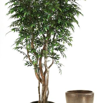 7' Ruscus Tree On Gnarly Trunks In Metallic Bronze Stoneware Pot