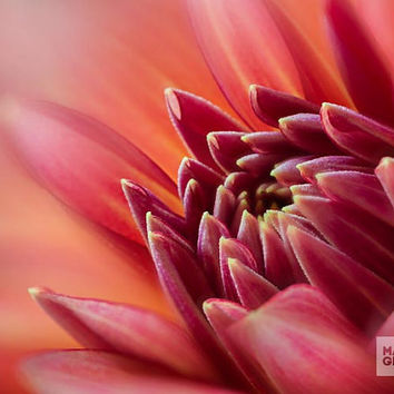 Art Print Red Dahlia Flower, Macro Photography, Nature Wall Art, Floral Print