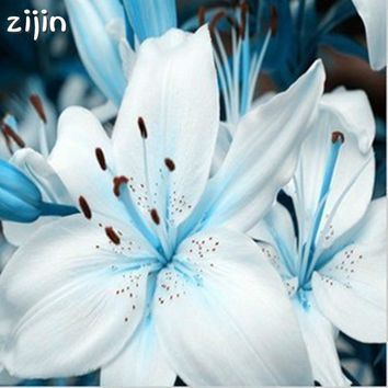 100pcs Special Blue Heart Lily Plant Potted Bonsai Plants Lily Flower For Home Garden Purify Indoor Air Mixing Color