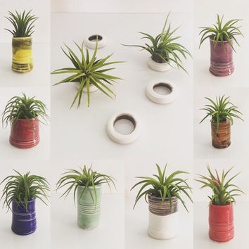 Shop collectible pottery vases on wanelo for Air plant holder ideas