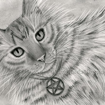 Long Haired Tabby Cat Tarot Art Cat Portrait Drawing Page of Pentacles Fantasy Cat Art Print 8x10 Cat Lovers Art