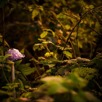 Toadstool Photo, Forest Photography, Magical, Golden, Autumn Decor, Woods, Fae Art, Mushroom, Large Wall Art, Green, Nature Home Decor