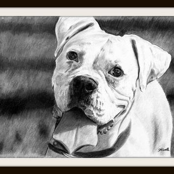 White Boxer B&W - Pencil Dog Drawing A4 Size Limited Edition Print