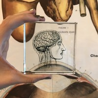 Clear Glass Brainiac Paperweight