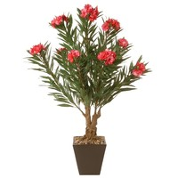 """32"""" Oleandro Plant 