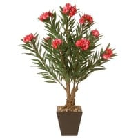 "32"" Oleandro Plant 