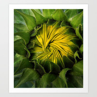 Sunny Center Art Print by DebS Digs Photo