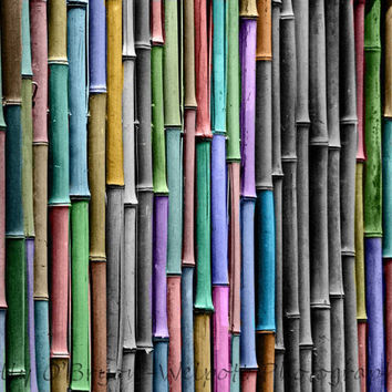 Black and White fine art print bamboo with selective rainbow coloring grape purple, blue, nursery art
