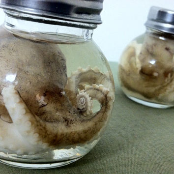 Baby Octopus (Ball Jar) - Real Preserved Wet Specimen- Great halloween prop!