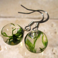 Cat Tail Moss (Isothecium myosuroides) Sphere drop Earrings,  bryophyte, jewelry, woodland, forest, plant jewellery, Surgical steel