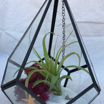 Geometric Airplant Terrarium with Airplant