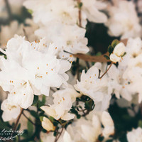White Mini azaleas #floral by Andrea Anderegg Photography