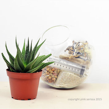 Succulent Terrarium// Large Half Slope Bubble Terrarium// Living Home Decor// Green Gift