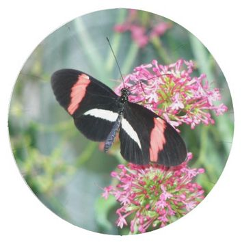 Tropical Butterfly on Flower Photo Paper Plate