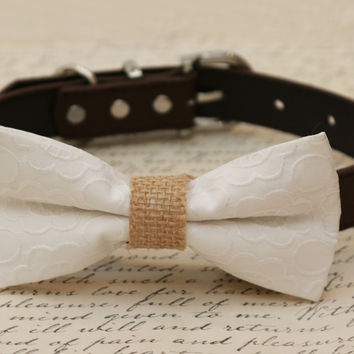 White Dog Bow Tie, White Bow attached to brown dog collar, Pet wedding accessory, Dog birthday gift, White floral bow tie, dog lovers