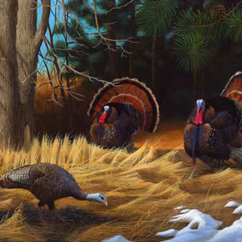 Turkies Giclee Print Poster by Leo Stans