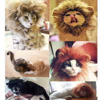 Lion's Mane Cat Hat Hair Cat's Toy Like Lion Stuffed Plush Pet Toy 3 Colors = 1929935748