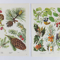 Autumn decor, Fall decor, Botanical art, Vintage botanical prints, Nuts, berries, Botanical illustrations, unframed pictures, autumn art