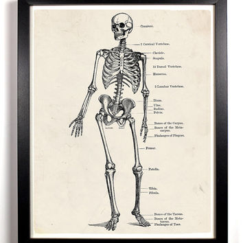 The Human Skeleton Anatomy Antique Illustration  8 x 10 Giclee Art Print Upcled Collage Recycled Book Art Buy 2 Get 1 FREE