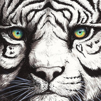 Print  Heart Painting Valentine's White Tiger by TheDaytimeHeroes