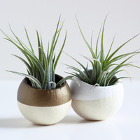 Mini Air Plant Pod Set of 2 - Gold and White