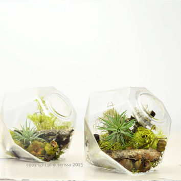 Miniature Air Plant Terrarium// Gem// Home Decor// Green Gift// Tabletop Terrarium// Hostess Gift