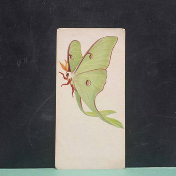 Vintage Luna Moth Insect Flash Card Color Illustration Paper Ephemera Art Decor Nature Bug Collage Crafts Supply