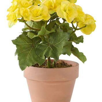 "Yellow Silk Begonia Flower Plant in Clay Pot - 11"" Tall"