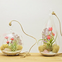 "Bliss Gardens Air Plant Terrarium with Rose Quartz 4"" Round Glass or 7"" Teardrop Glass / Pretty Pink Countryside"