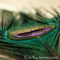 Natural Abstract Peacock Photograph - spring abstract bright bold purple tan home decor nursery bird Funky Feather 24x30