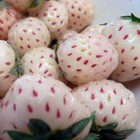 "White Carolina Pineberry Plant - 4"" Pot - Pineapple/Strawberry Flavor"