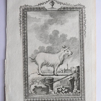 Antique Goat Engraving 1791 Buffon Engraving, Buck of Juda, Vintage Goat Print, Old Farm Animal Print, Art Gift for Animal Lover Goat Gift