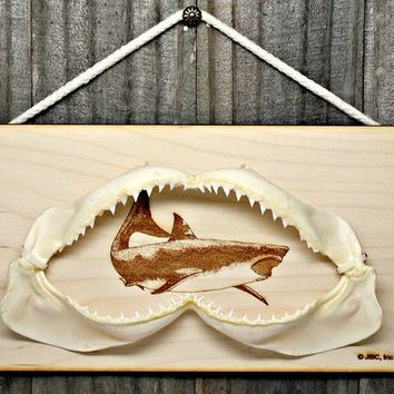 Large Real Shark Jaw with Sharks Teeth Taxidermy Wall Mount on Wood Plaque #2018-16