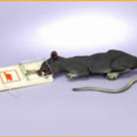 Rat in Trap Halloween Decorations/Props