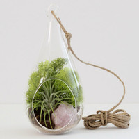 Teardrop Rose Quartz Air Plant Terrarium Kit with Chartreuse Moss