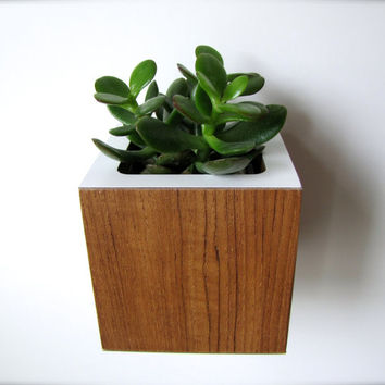 """Succulent Planter ~ Teak and White ~ Desktop OR Wall Hanging Style ~ actual size 3.38"""" sq ~ plant not included"""