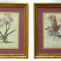 Vintage Botanical Print Framed Lithograph Print in Gold Gild Frame- Set of 2