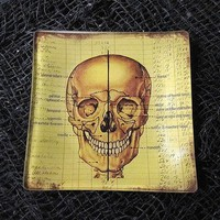 Skull Anatomy Glass Tray