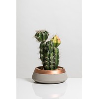 """12"""" Cacti Collection"""