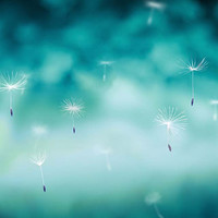 dandelion photography abstract dandelion rain 8x10 8x12 fine art photography nature dandelion wall art teal nursery decor whimsical spring