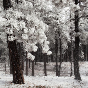 Winter Woods Landscape Photography, SnowyTrees, Home Decor, Black & White or Color | ' Frozen Silence'