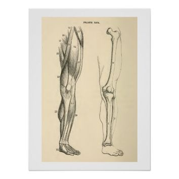 Vintage Anatomy | Muscles and Bones of the Leg Print
