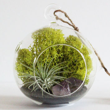 Small Amethyst Crystal Point Air Plant Hanging Terrarium Kit with Charcoal Sand