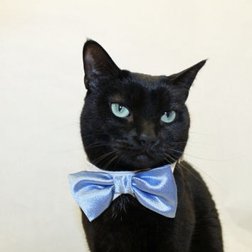 Wedding Cat Collar with Shirt Collar and Satin Stain Bow Tie Collar pet clothes cat clothes