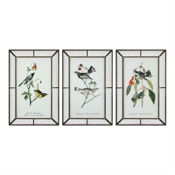 Warblers Bird Prints S/3
