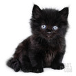 Black Little Kitten Sitting Down Photographic Print by Bartkowski at Art.com
