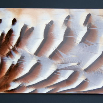 Pheasant Feather Placemats- Color 6