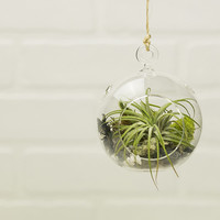 Hanging Air Plant Terrarium - Custom